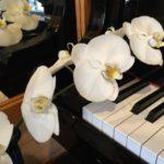 ピアノを調律しました(^^)/